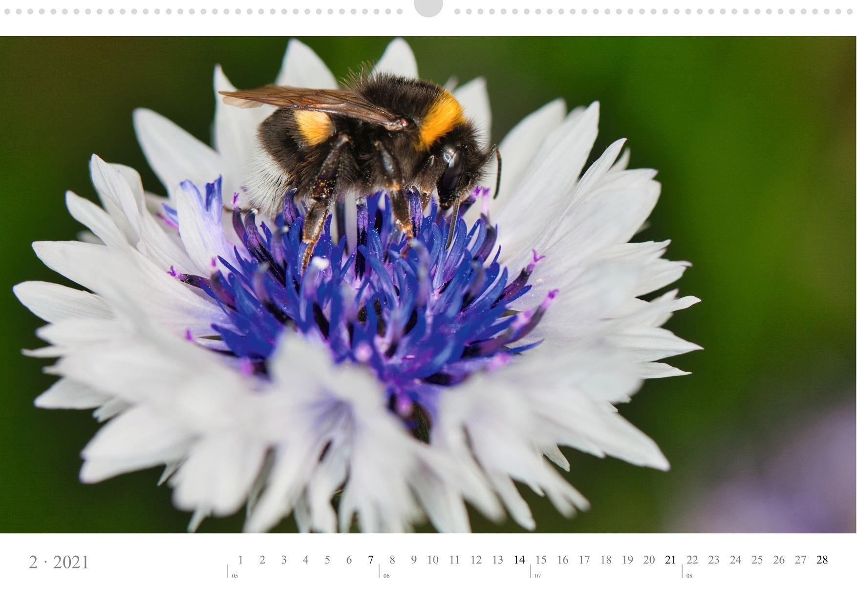 LCQ-Insekten-Kalender-2021-E1_002-1