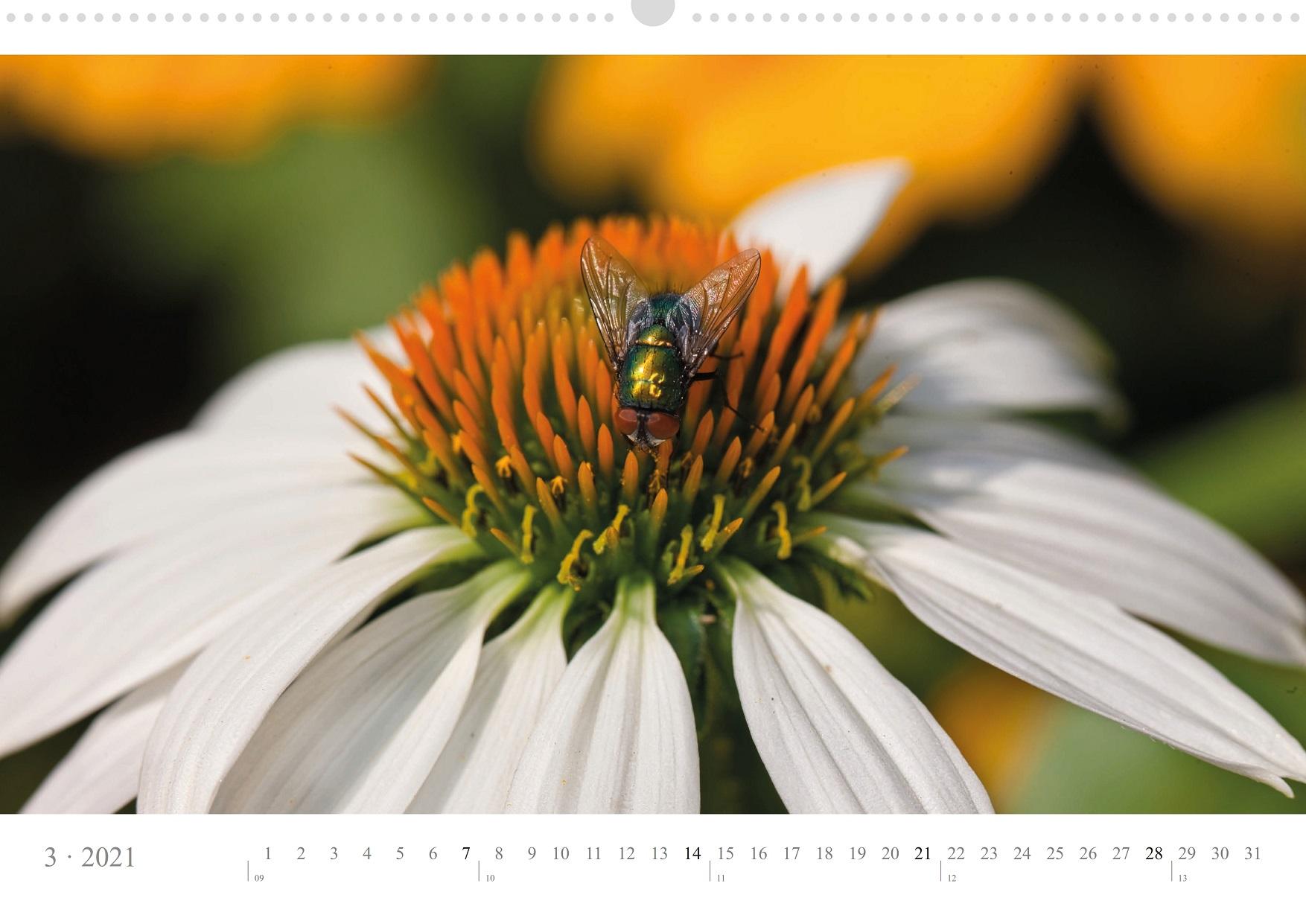 LCQ-Insekten-Kalender-2021-E1_003-1