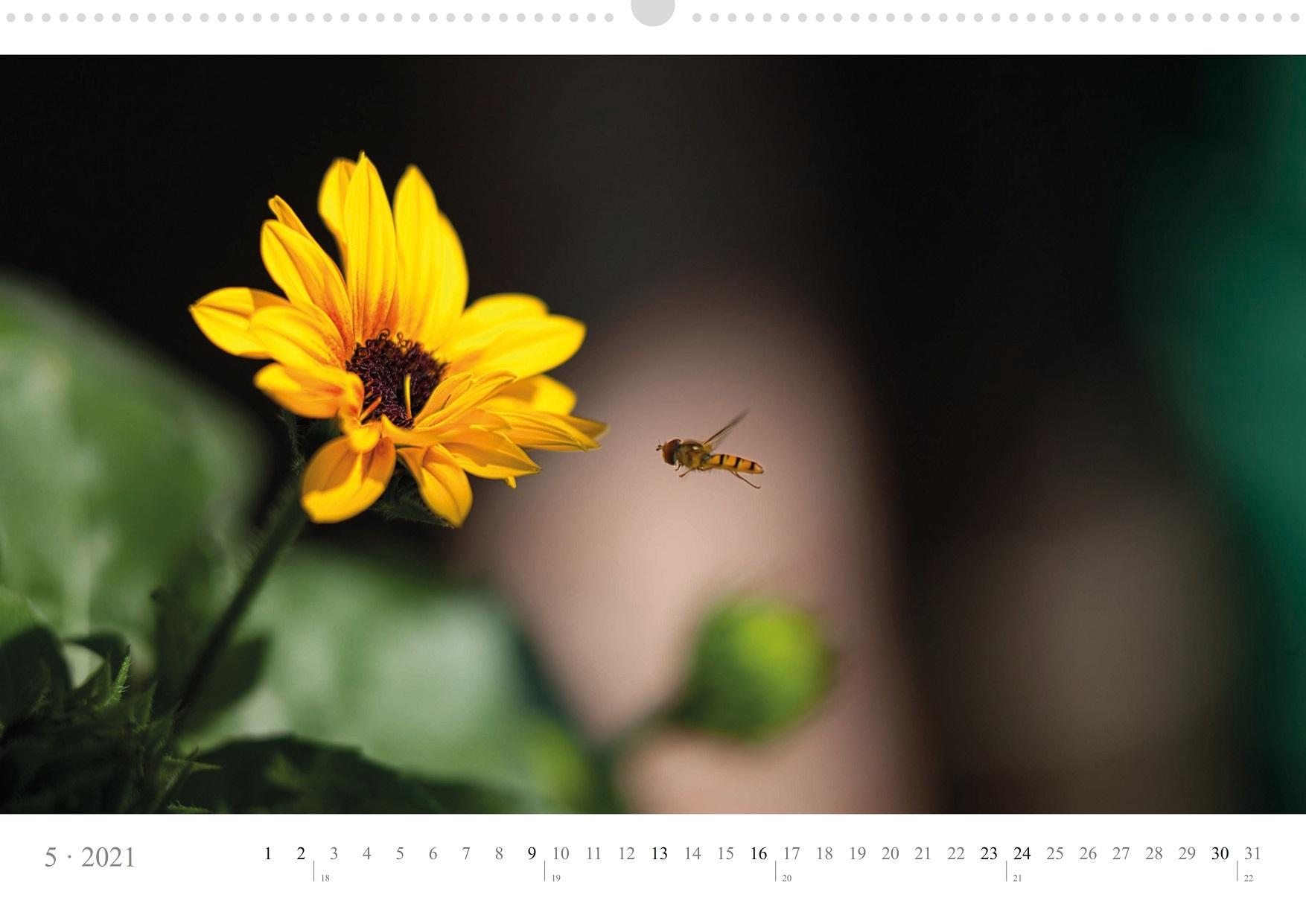 LCQ-Insekten-Kalender-2021-E1_005-1
