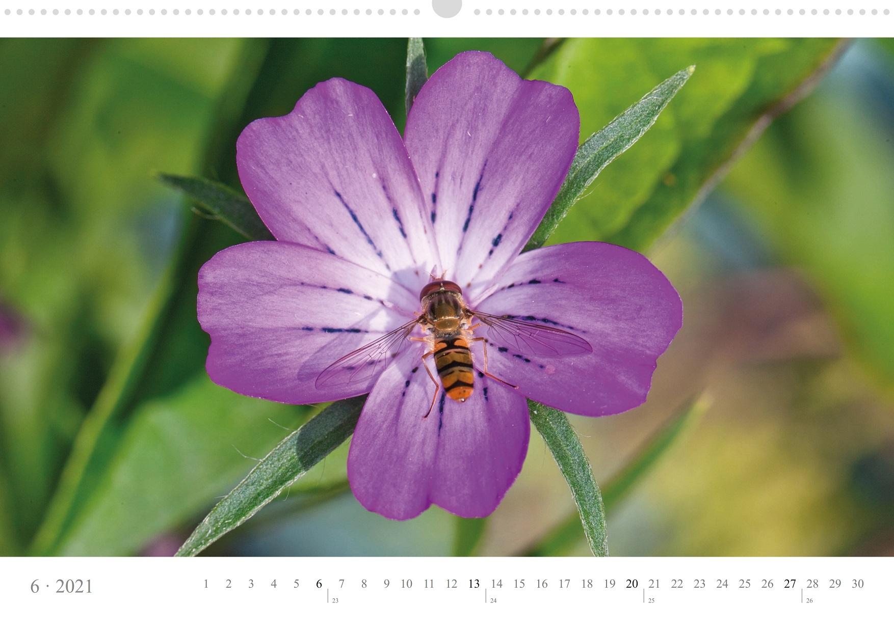 LCQ-Insekten-Kalender-2021-E1_006-1