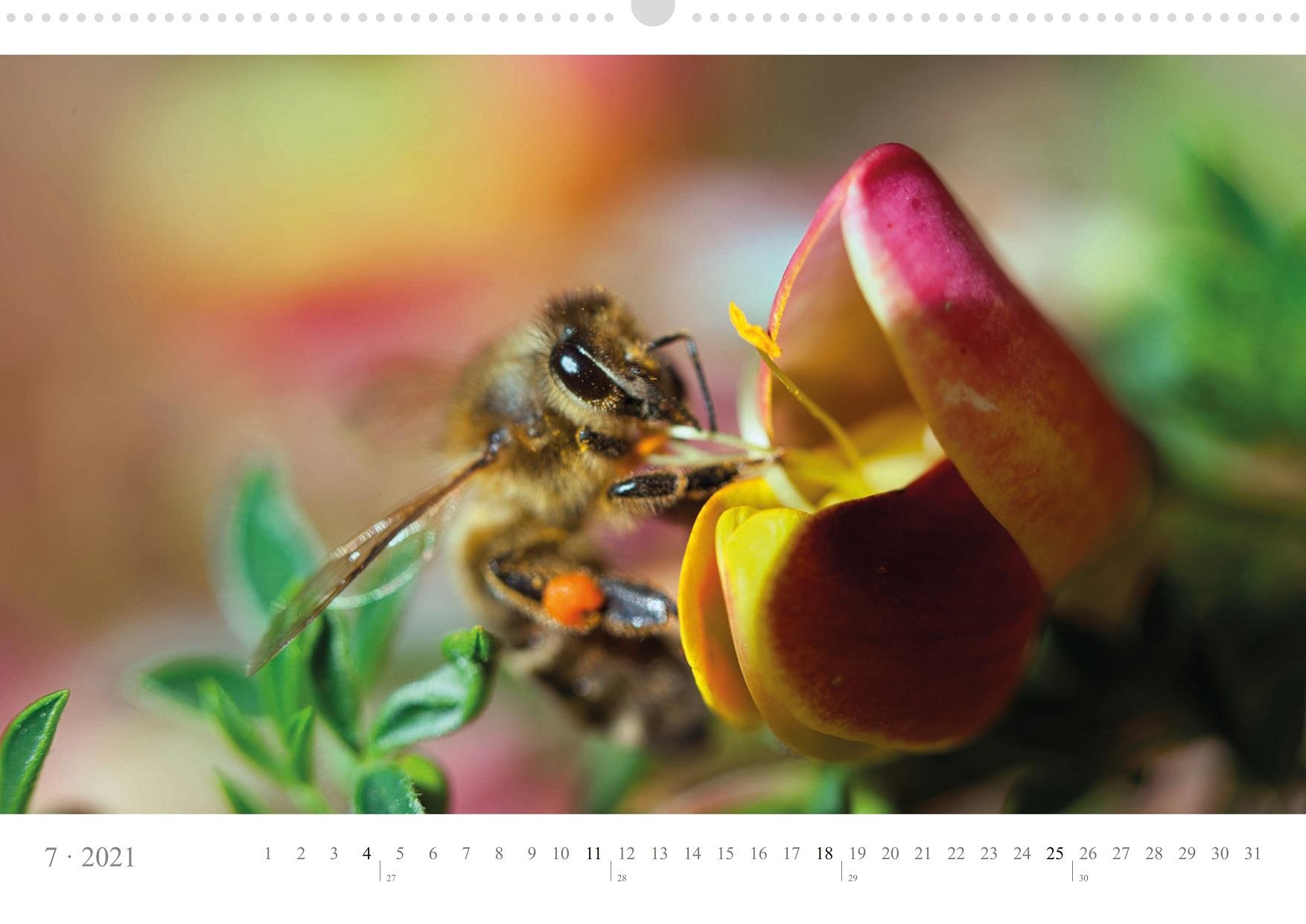 LCQ-Insekten-Kalender-2021-E1_007-1