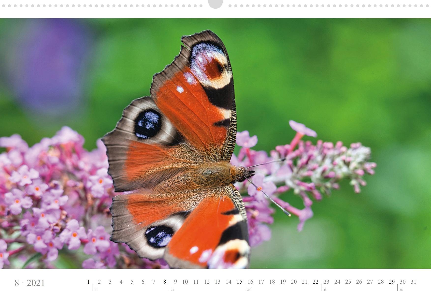 LCQ-Insekten-Kalender-2021-E1_008-1
