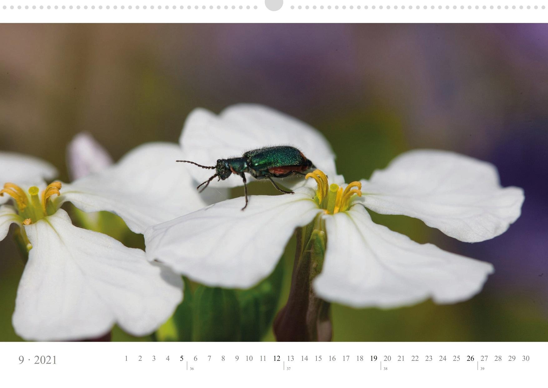 LCQ-Insekten-Kalender-2021-E1_009-1