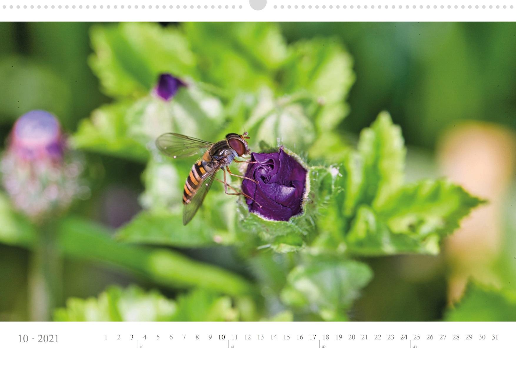 LCQ-Insekten-Kalender-2021-E1_010-1