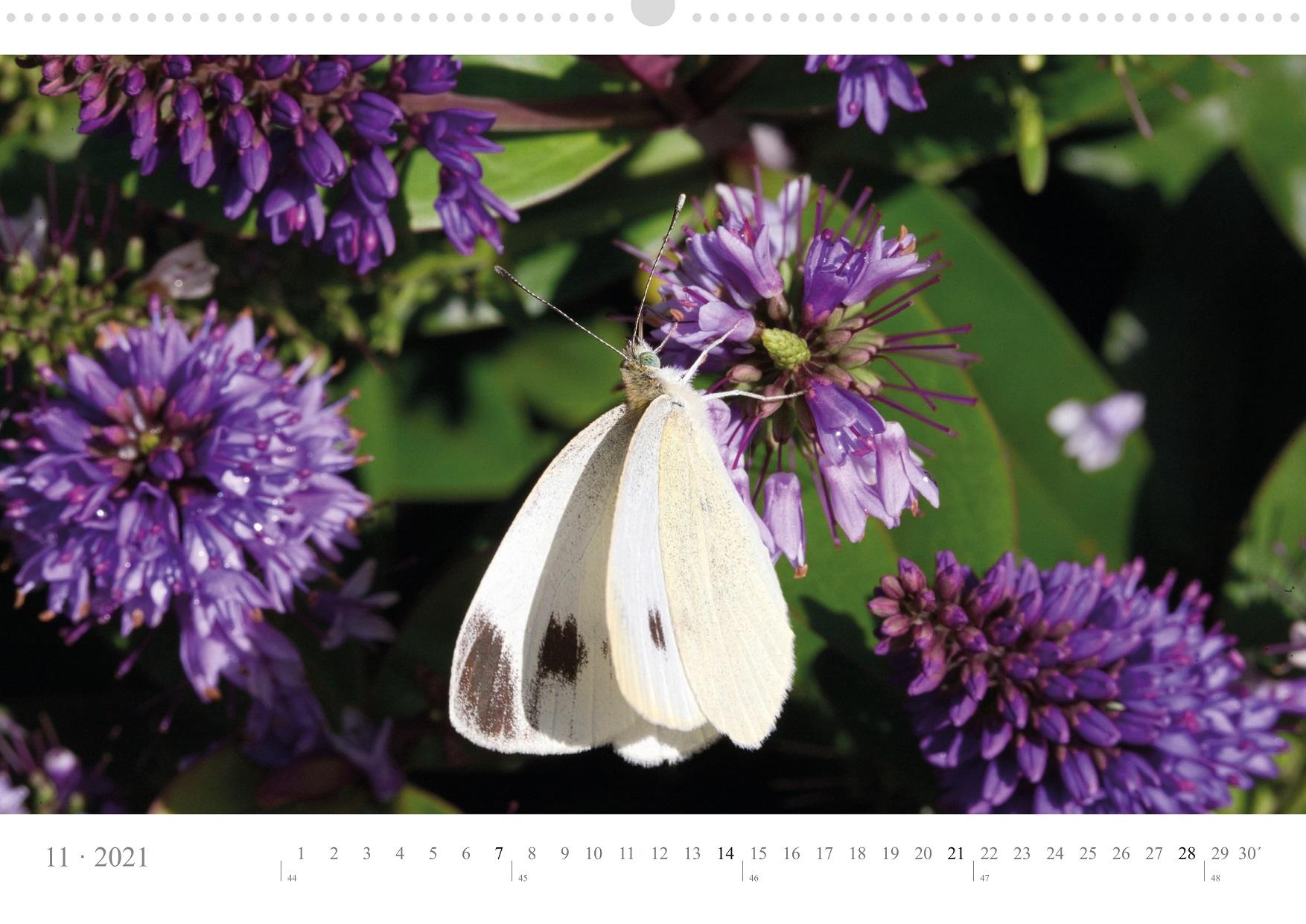 LCQ-Insekten-Kalender-2021-E1_011-1