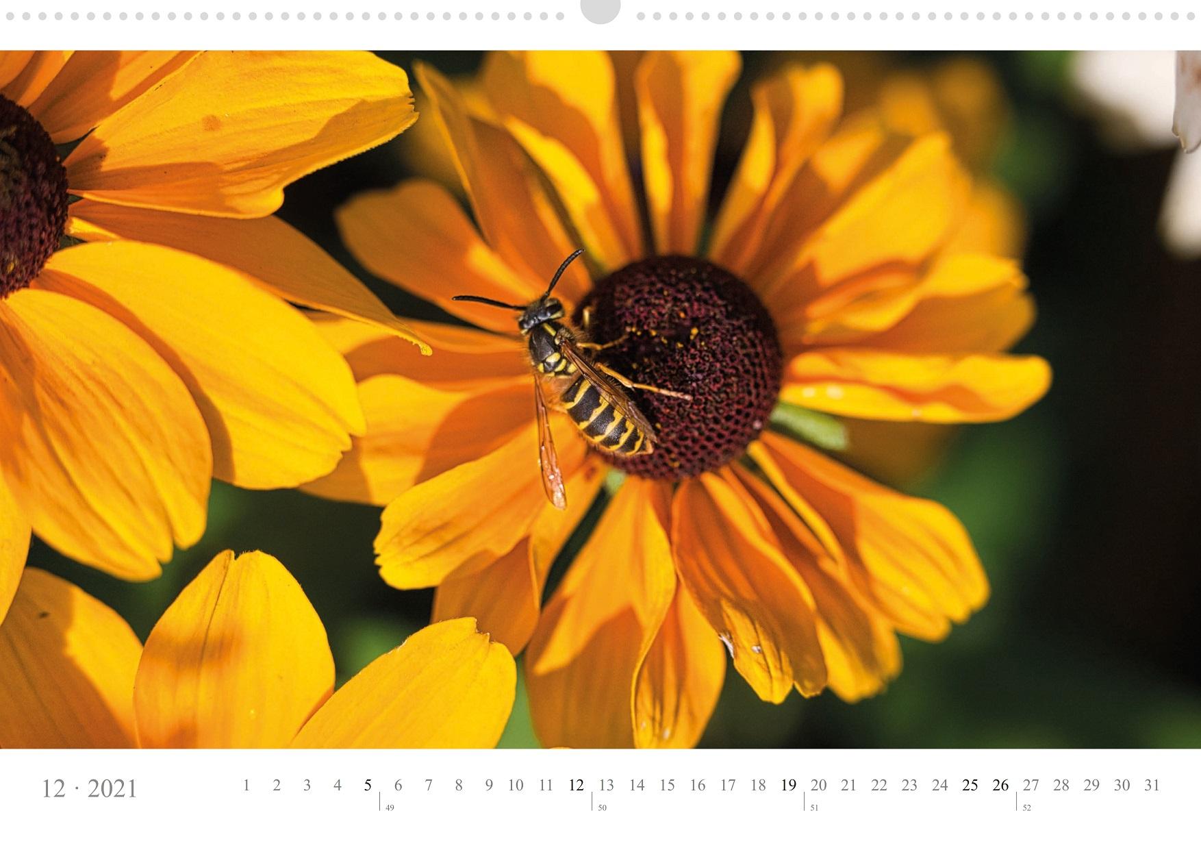 LCQ-Insekten-Kalender-2021-E1_012-1