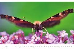 LCQ-Insekten-Kalender-2021-E1_001-1