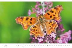 LCQ-Insekten-Kalender-2021-E1_004-1