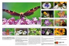 LCQ-Insekten-Kalender-2021-E1_013-1